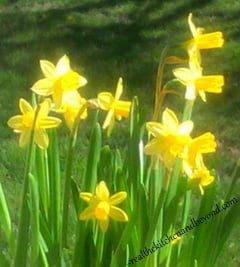 springtime and gardens