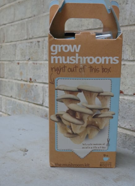 Grow your own mushrooms with this growing kit