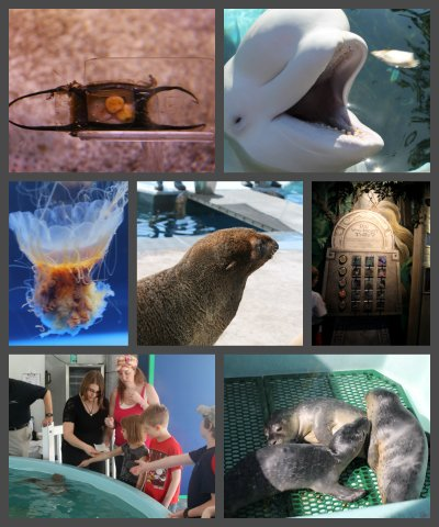 mystic aquarium collage of animals