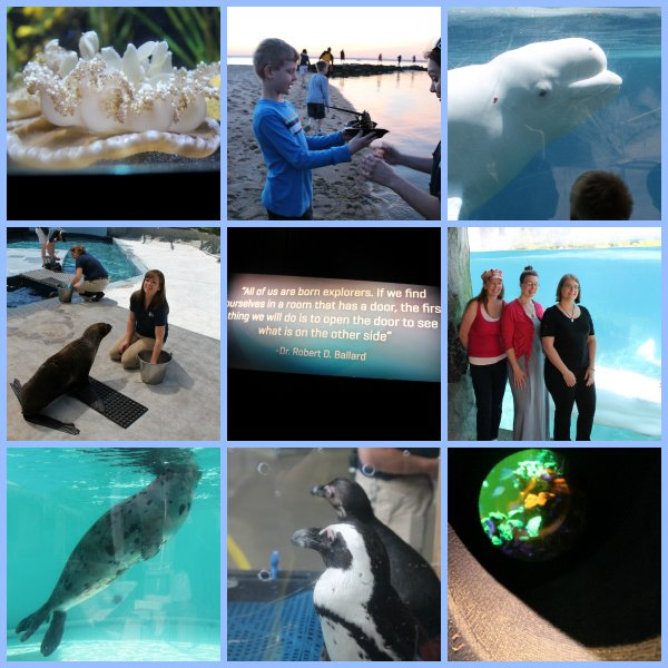 collage of pictures from mystic aquarium