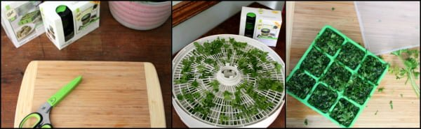 How to preserve herbs with freezing and drying