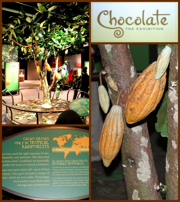 Chocolate the Exhibition Academy of Natural Sciences