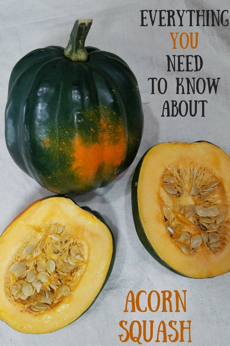 Everything You Need to Know about Acorn Squash