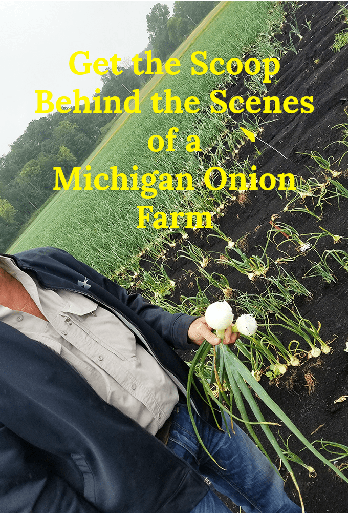 Onion Grower in Michigan Onion Field
