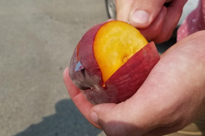 Road Trip Stop: A Peach's Story, From Orchard to Store