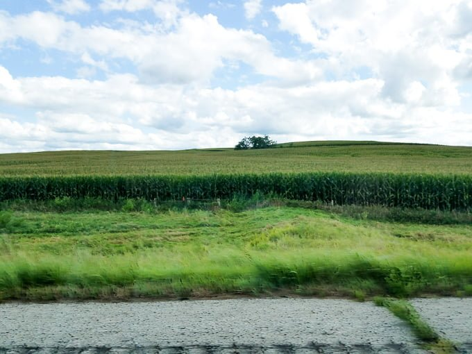 Cornfields Iowa